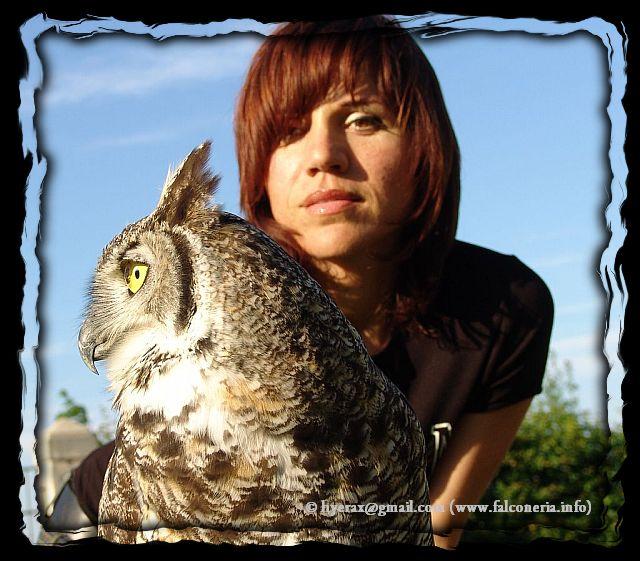 Civetta sul binario 1 - Pagina 2 Gufo_reale_virginiano_great_horned_owl_bubo_virginianus_falconry_a